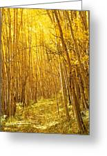 Yellow Forest Trail Greeting Card