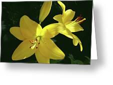 Yellow Garden Lilies Greeting Card