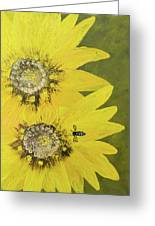 Yellow Gazanias And Bee  Greeting Card