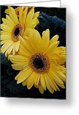 Yellow Gerbera Daisies Greeting Card