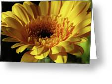 Yellow Gerbera Macro Greeting Card