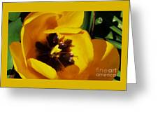 Yellow Glory From A Tulip Greeting Card