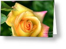 Yellow Golden Single Rose Greeting Card