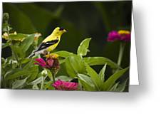 Yellow Goldfinch Greeting Card