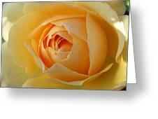 Yellow Graham Thomas Rose Greeting Card by Jocelyn Friis