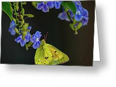 Yellow Grass Butterfly Greeting Card