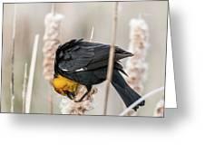 Yellow Headed Blackbird #7 Greeting Card