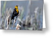 Yellow Headed Blackbird Greeting Card
