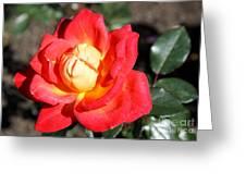 Yellow Heart Rose Greeting Card