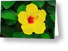 Yellow Hibiscus 3388 Greeting Card