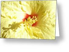 Yellow Hibiscus Close Up Greeting Card