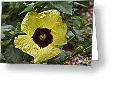 Yellow Hibiscus F134 Greeting Card