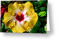 Yellow Hibiscus Flower 1 Greeting Card
