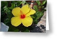Yellow Hibiscus Shadows Greeting Card
