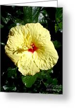 Yellow Hibiscus The Hawaiian State Flower Greeting Card