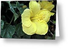 Yellow Hibiscus Watercolor Greeting Card