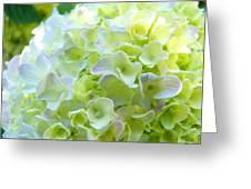 Yellow Hydrangea Flowers Art Prints Baslee Troutman Greeting Card