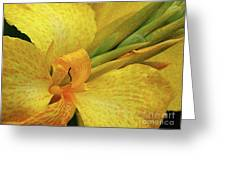 Yellow In The Morning Greeting Card