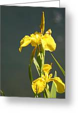 Yellow Iris 2 - Floral Greeting Card