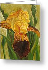 Yellow Iris Greeting Card