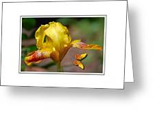 Yellow Iris And Butterfly Greeting Card