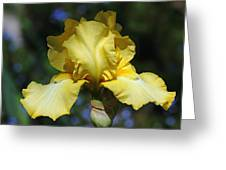 Yellow Iris Is For Passion Greeting Card
