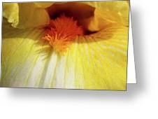 Yellow Iris Secret Greeting Card