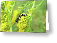 Yellow Jacket Greeting Card