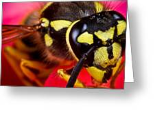 Yellow Jacket Greeting Card by Ryan Kelly