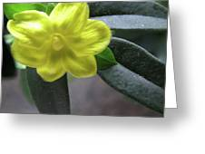Yellow Jasmine Greeting Card
