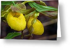 Yellow Lady's Slipper Greeting Card