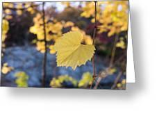 Yellow Leaf Newton Upper Falls Fall Foliage Greeting Card