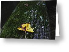 Yellow Leaf On Mossy Tree Greeting Card