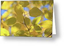 Yellow Leaves. Greeting Card