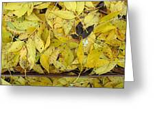 Yellow Leaves On The Ground  Greeting Card