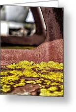 Yellow Lichen Greeting Card