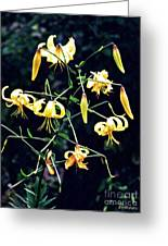 Yellow Lilies In Fort Tryon Park Greeting Card