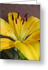Yellow Lily 2 Greeting Card