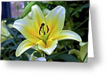 Yellow Lily Longwood Gardens Greeting Card