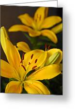 Yellow Lily Mirror Greeting Card