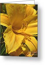 Yellow Lily Shines Brightly  Greeting Card