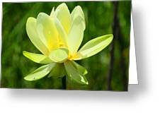 Yellow Lotus Greeting Card