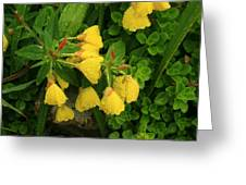 Yellow Lungwort 3 Greeting Card