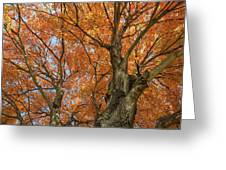 Yellow Maple Tree Greeting Card