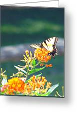 Yellow Monarch Butterfly Greeting Card