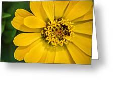 Yellow Monastery Zinnia Greeting Card