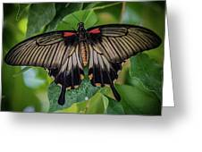 Yellow Mormon Greeting Card