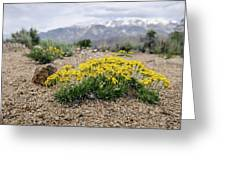 Yellow Mountain Blooms Greeting Card by Margaret Pitcher