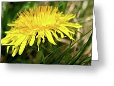 Yellow Mountain Flower's Petals Greeting Card
