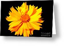 Yellow Mum On Black Background Greeting Card